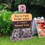 El Yunque National Forest - Sierra Palm Picnic Area
