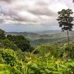 El Yunque National Forest - Yokahú Observation Tower - Puerto Rico