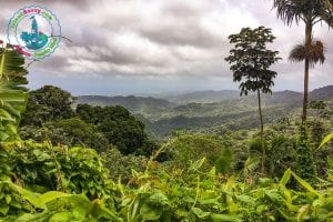 Visiting Puerto Rico's Tropical Rain Forest – El Yunque