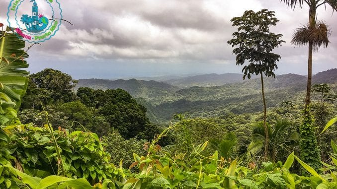 El Yunque National Forest - Yokahú Observation Tower - Puerto Rico